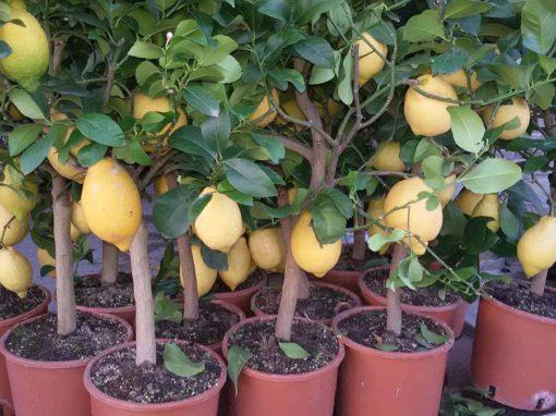Piante da frutto e piccoli frutti